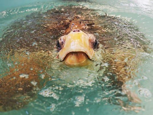 turtle001.jpg