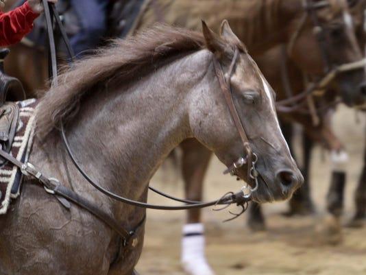 MON Cutting Horse Show_010