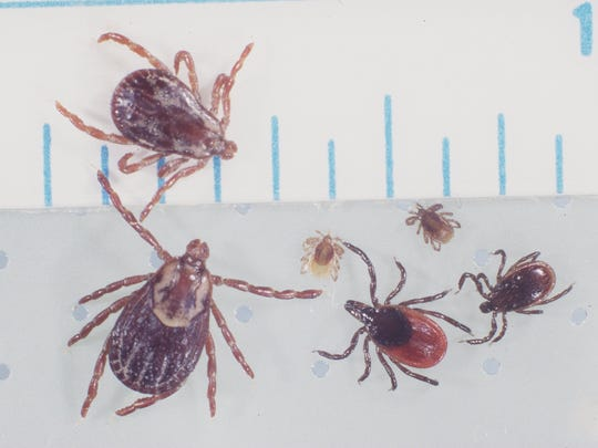 Protect yourself against Lyme disease.
