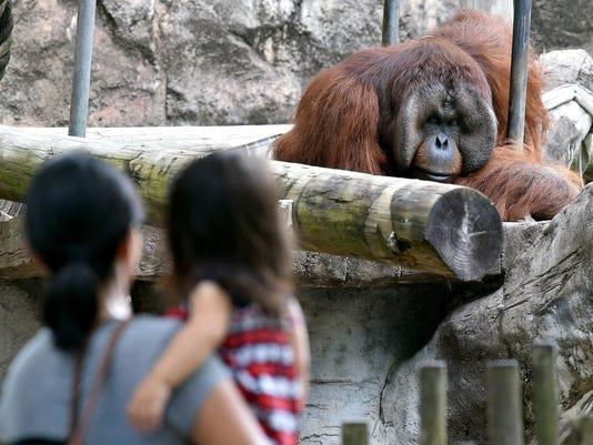 MAIN -- TCL Jackson Zoo2 (2).jpg