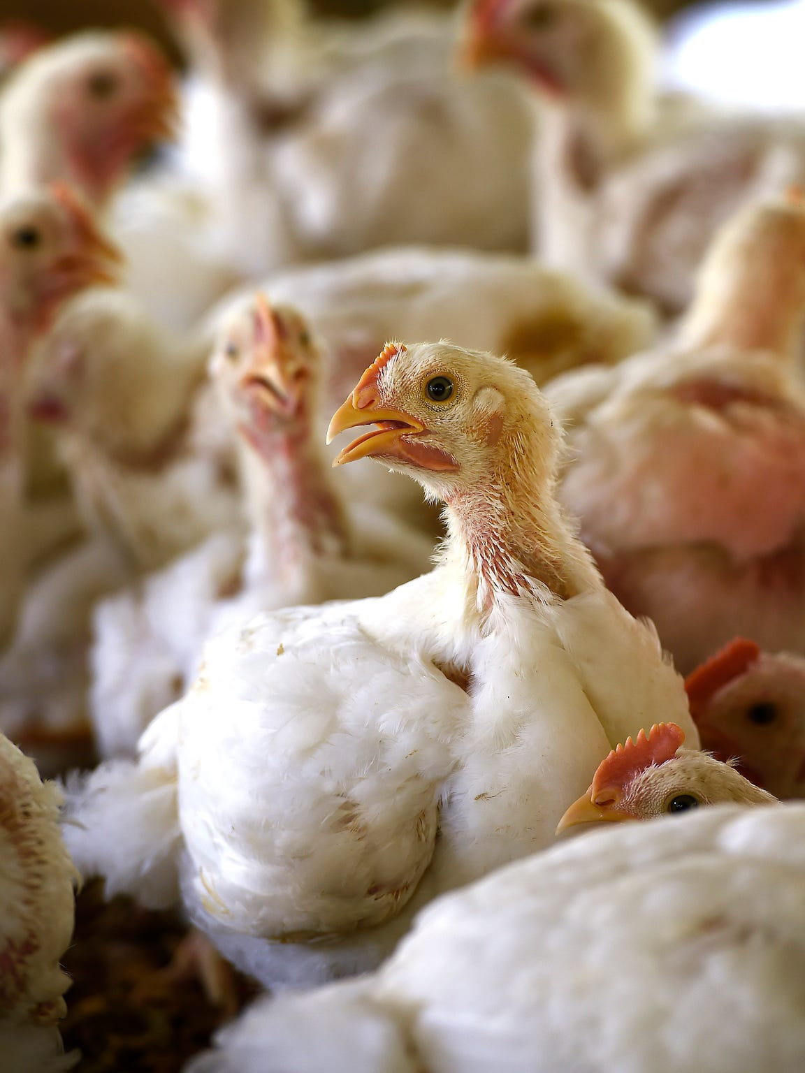 KORE Foundation uses chicken farming as a means of