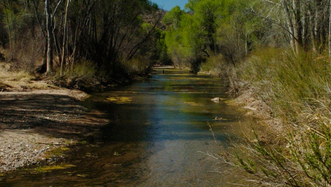 The San Pedro River, along the Charleston to Fairbank section.