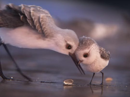 """Pixar's """"Piper"""" is among the films nominated for this year's Animated Shorts Oscar."""