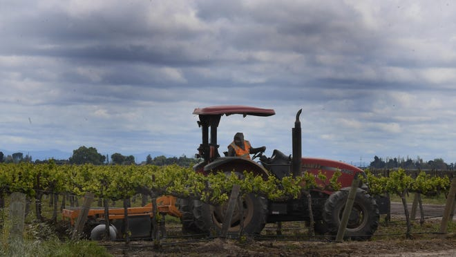 A tractor operator disks between grape plants in a field north of Highway 12 east of Highway 5 in April. Agriculture in San Joaquin County represented 7.1 percent of the county's total economic output in 2018, generating $5.732 billion when production, processing, multiplier effects and employment are taken into account.