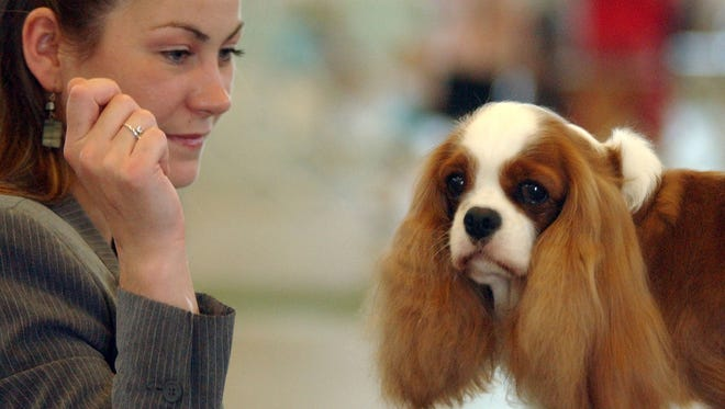 A wide range of dog breeds will be competing during the Harding Classic this weekend at Veterans Memorial Coliseum in Marion. The Dan Emmett Kennel Club show runs Friday and Saturday. The Marion Kennel Club show is set for Sunday and Monday.