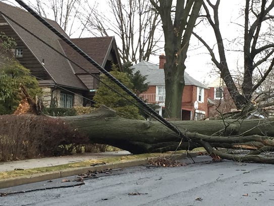 A tree that fell during Wednesday night's storm rests