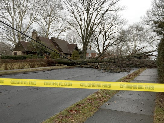 A tree that fell during Wednesday night's storm blocks