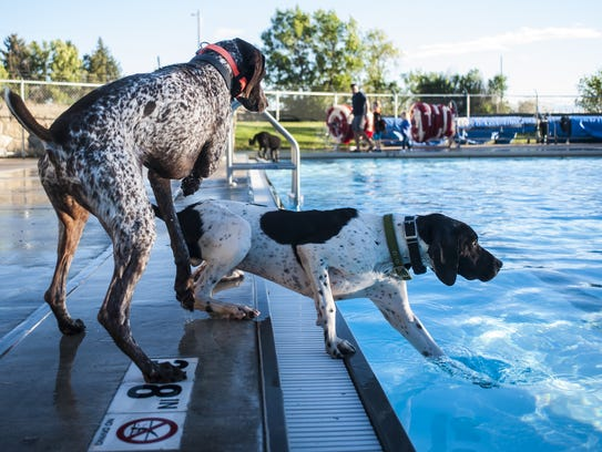 Dogs frolic during Drool in the Pool at Electric City Water Park.