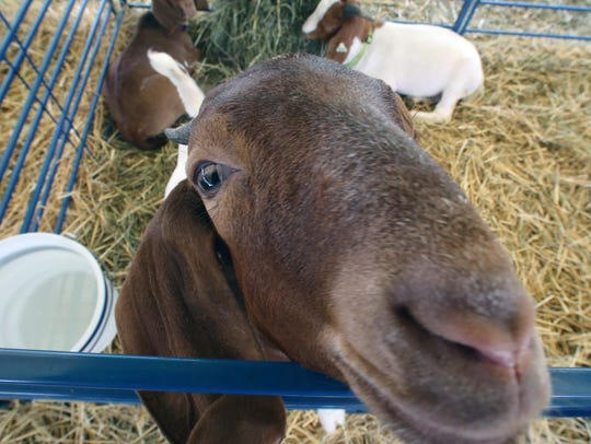 FInal day for the 2016 Somerset County 4-H Fair is