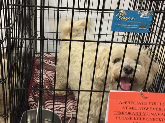 Sixty Bichon/Maltese dogs were turned over to the Broome County Humane Society from a Binghamton home.