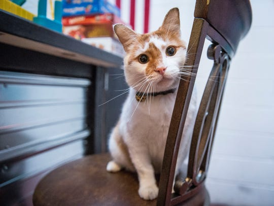 Brewster, the brewery cat at The Guardian Brewing Company,