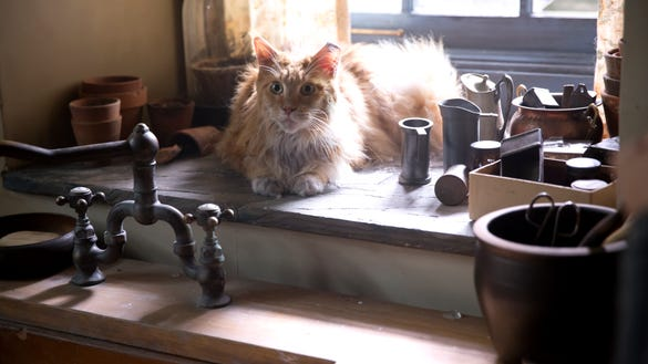 Why Buttercup The Cat Is The Greatest Hunger Games