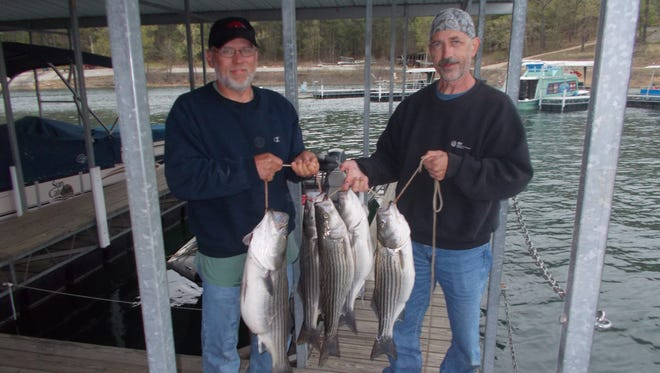 Clayton and Dave had a lot of success during a recent trip fishing for stripers on Norfork Lake.