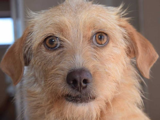Alvin - Male terrier mix, adult. Intake date: 8/7/2017