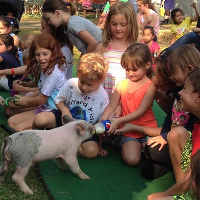 Ava Wdovichik feeds a piglet at the 2014 Middlesex