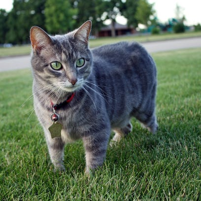 Cats are allowed outside in Appleton, Neenah and Kaukauna, but owners must maintain control of their animal.