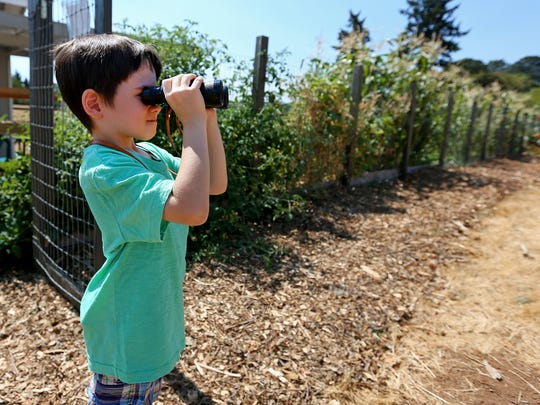 Nolan Venti searches the tree line above a field near his home with his binoculars. It's where he saw a cougar on Monday.