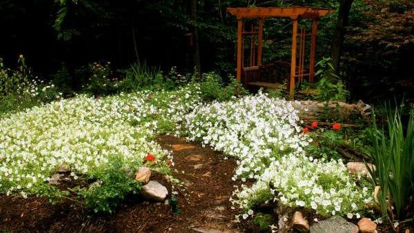 Garden landscape.