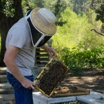 Keeping TABs on bees in the Central Valley