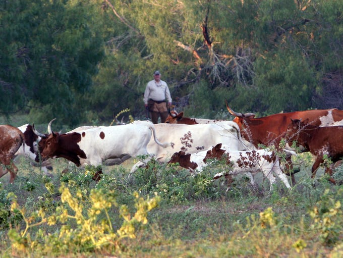 Sharing a dove field with cattle generally isn't a