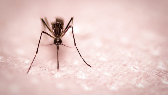 What can you do to protect yourself from mosquitoes this summer?