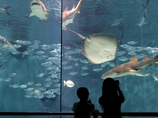 Gulfport moves forward with world-class aquarium project
