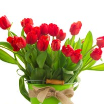 Favor your loved one with red tulips on Valentine's Day, Feb. 14.
