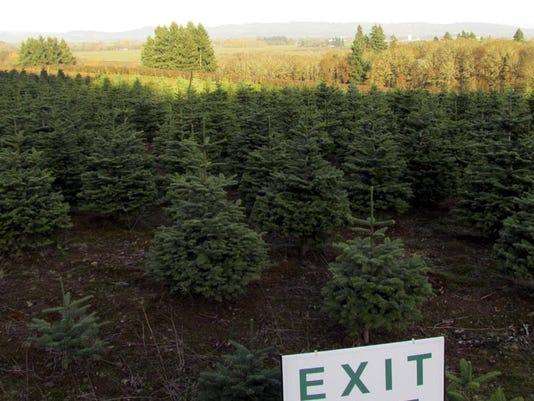 Bigfoot Christmas Tree Farm