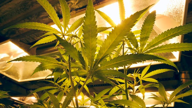 Doctors say the legalization of recreational marijuana use in Colorado has given some people a false sense of the drug's safety.