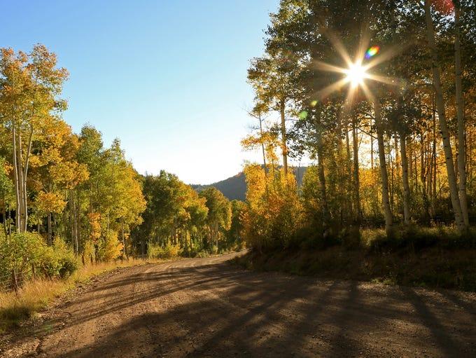 Autumn colors on the Kolob Terrace Road.