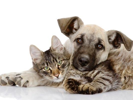 20150408_dog_cat_shutterstock_114350371.jpg