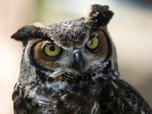 OWL PROWL  WILDLIFE