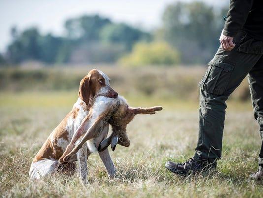 EPA EPASELECT HUNGARY HUNTING DOGS LIF ANIMALS HUNTING HUN FE