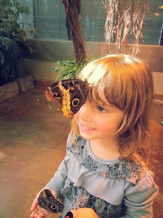 MPM Butterflies