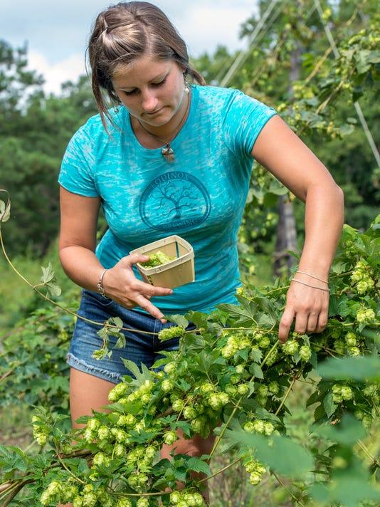 le- hops farm 1553.jpg