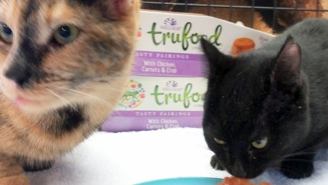 Rescued cats Inky and Calliope chow down at DAGSHIP Rescue, Deming's no-kill animal sanctuary at 1755 Domingo Road SW.
