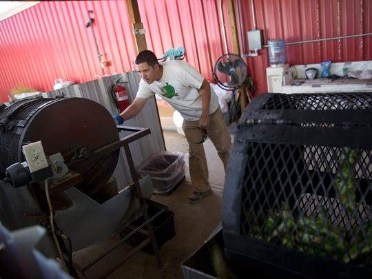 Matthew Prespentt checks on a batch of green chile as it is roasted Thursday at Sutherland Farms near Aztec.