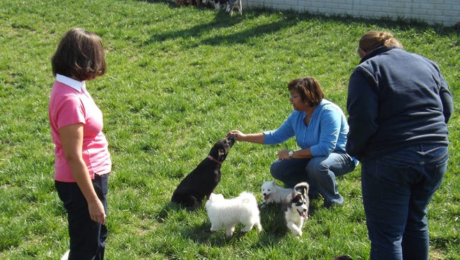 Candace Croney, director of Purdue University's Center for Animal Welfare Science, middle, interacts with puppies at a breeding farm in Odon, Ind.