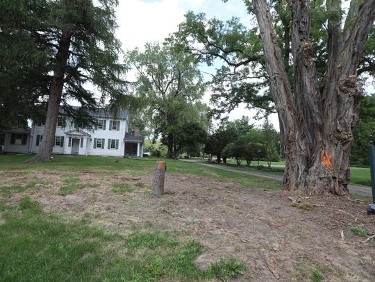 Trees are tagged for removal near the Clark House in