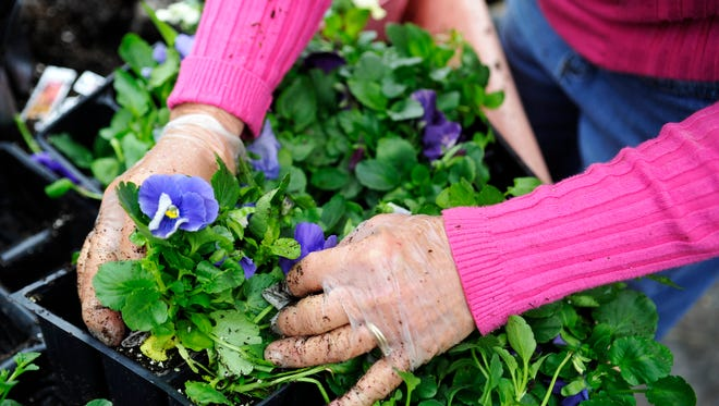 Learn more about gardening March 12 at GardenWise, a daylong educational program from Penn State Extension and the York County Master Gardeners.