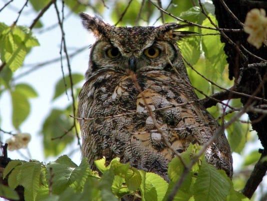 5/15 cd owl 2