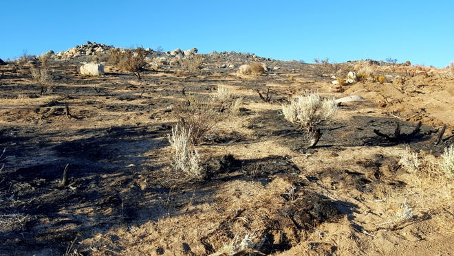 The hopscotch fire pattern has left some vegetation alive following wildfire.