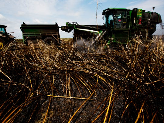 Sugar cane is harvested on U.S. Sugar lands in Clewiston in 2015.