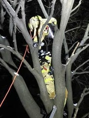 Firefighters rescue a cat that was stuck in a tree