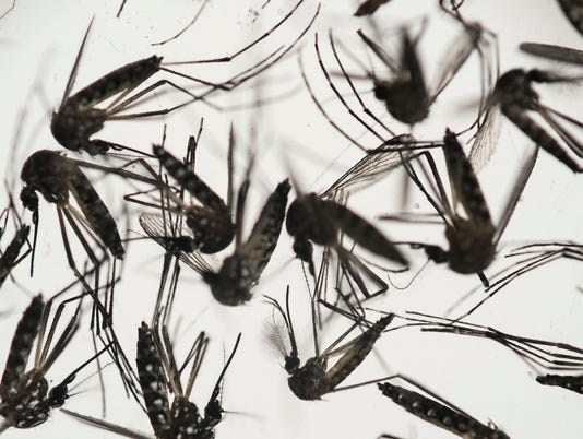 Zika-transmitting mosquitoes