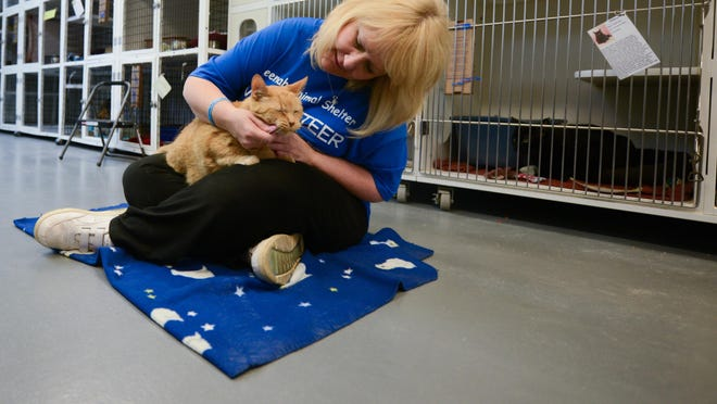 Volunteer Cathi Kissinger pets Oliver, a cat up for adoption, at the Neenah Animal Shelter in 2013.