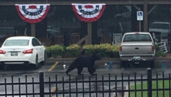 A bear was spotted at the Cracker Barrel near Knoxville Center Mall on Wednesday, June 27, 2018.