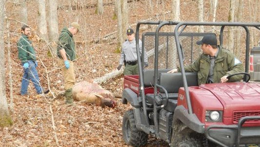 Conservation officials haul away the carcass of an elk shot and killed for its antlers in Shannon County, near the Current River. in December 2015. The poaching case remains unsolved.