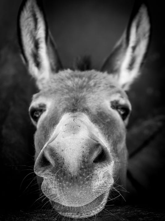 Democrats Donkey