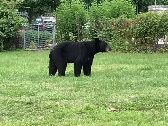 Residents of Little Falls and Woodland Park reported sightings of a black bear cub last summer.
